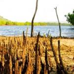 manglares2