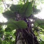rainforest socoa waterfalls
