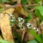 Ebano Verde Scientific Preserve