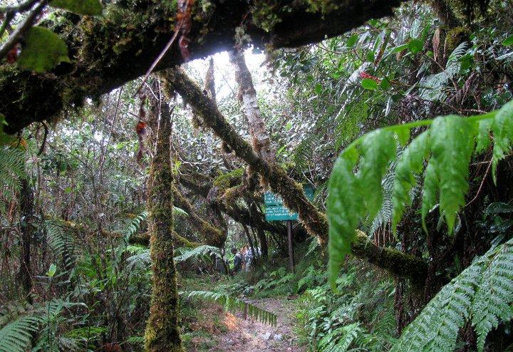 Cloud Forest Tours